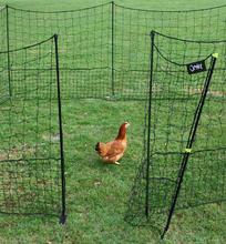 Atteggiamento - Pollaio per galline