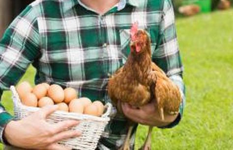 pollaio da giardino